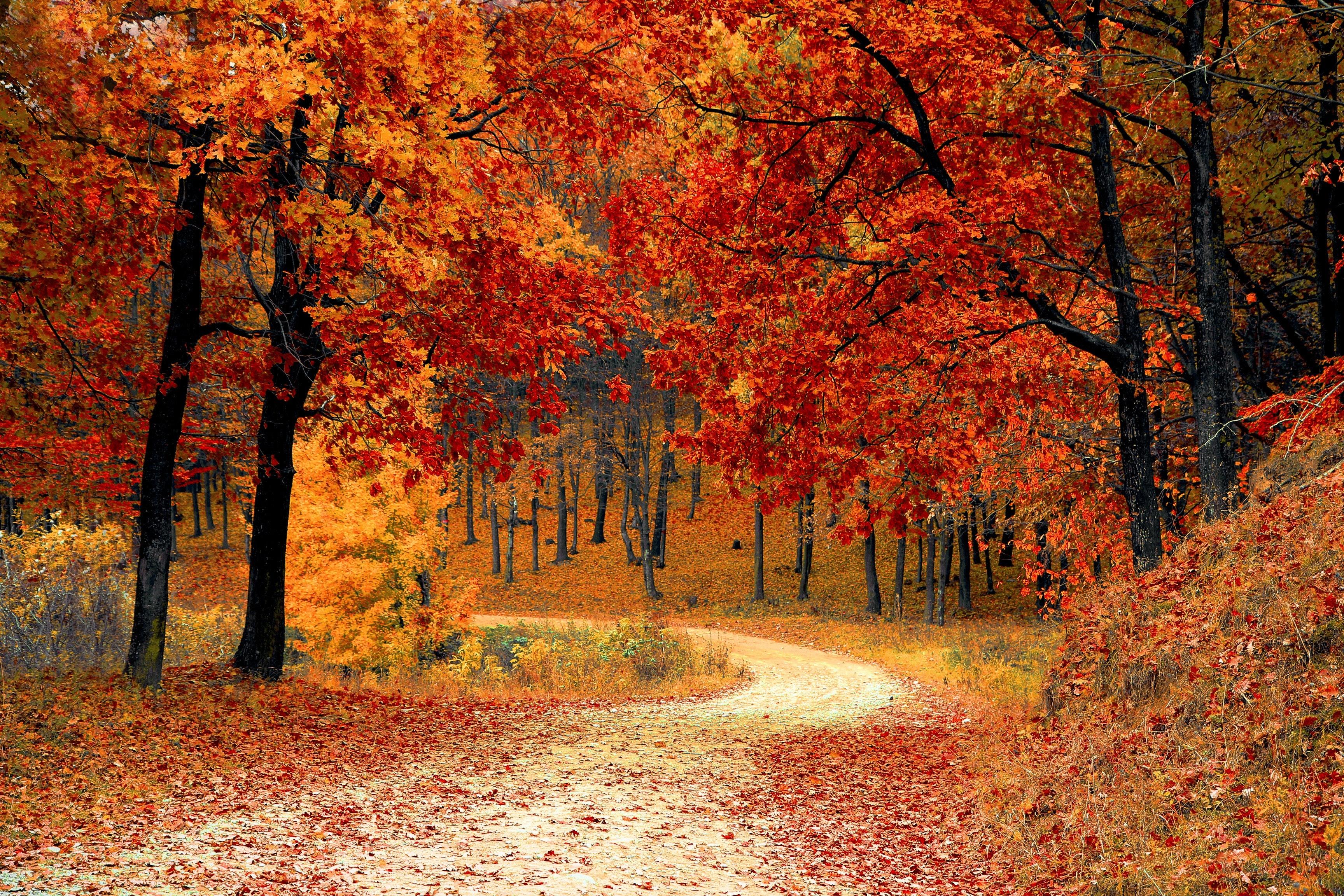 Jesen a vas dom